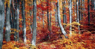 meilleures destinations pour voyager en automne